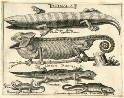 L 39 animal dans le cabinet de curiosit s - Le cabinet de curiosites ...