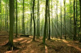 156 arbres font une forêt